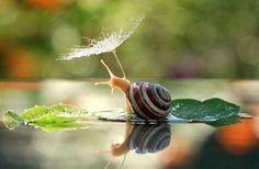 12 kisállat a természetből kölcsönzött esernyővel - fotók
