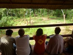 Watching the elephants Elephants, Laos, Home Decor, Homemade Home Decor, Interior Design, Home Interiors, Decoration Home, Elephant, Home Decoration