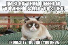 Grumpy Cat Quotes, Gato Grumpy, Funny Grumpy Cat Memes, Cat Jokes, Animal Jokes, Funny Animal Memes, Cute Funny Animals, Funny Cute, Funny Jokes
