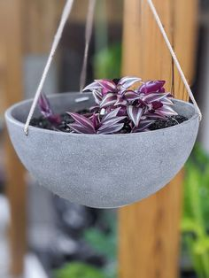 Learn how to care for a wandering jew plant. The wandering jew plant is hardy and easy to care for. It will make the perfect addition to your collection! Pothos Plant, Plant Cuttings, Wondering Jew Plant, Types Of Houseplants, Best Air Purifying Plants, Snake Plant Care, Plants In Bottles, Wandering Jew, Plants For Hanging Baskets