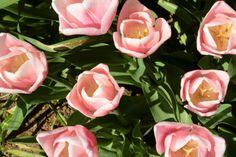 Voyage de noces et lune de Miel en Ecosse Plants, Photography, Honey, Moon, Romantic, Flowers, Photograph, Photography Business, Flora