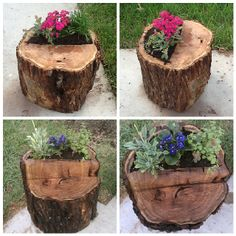 My new tree stump flower pots/tables filled with succulents and flowers! Luuuuuuv them! House Plants Decor, Plant Decor, Ribbon On Christmas Tree, Christmas Tree Decorations, Palm Trees Garden, Willow Tree Tattoos, Traditional Christmas Tree, Garden Planters, Log Planter