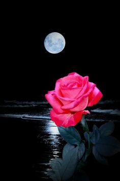 [New] The 10 Best Hairstyles Today (with Pictures) Beautiful Rose Flowers, Beautiful Moon, Romantic Flowers, Flower Phone Wallpaper, Flower Wallpaper, Wallpaper Backgrounds, Wallpapers, Moon Images, Moon Pictures