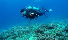 Pro Dive Davao has everything needed for local or visiting divers. Highly experienced and knowledgeable dive guides. Davao, Scuba Diving, Philippines, Boat, Island, Explore, Diving, Dinghy, Boats