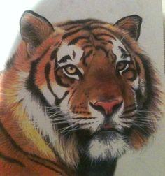 Tiger Drawings | tiger drawing by jarrydd