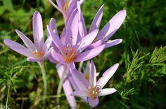 Flower field; summer