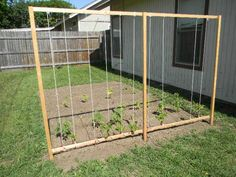 This is a very easy trellis idea for beans.