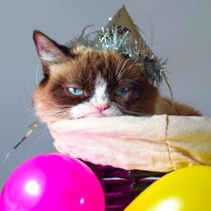 New Funny Happy Birthday Quotes Hilarious Grumpy Cat 70 Ideas Happy Birthday Friend, Birthday Wishes Funny, 3rd Birthday, Birthday Memes, Unhappy Birthday, Birthday Crafts, Birthday Nails, Birthday Greetings, I Love Cats