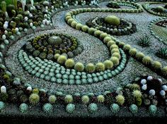 High Desert Design: Succulent Garden