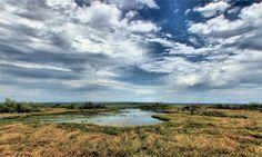 A 21,000 acre savanna and US National Natural Treasure, Paynes Prairie Preserve State Park, Micanopy, Florida