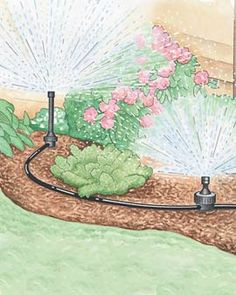 Eight Steps to a Water-Wise Garden   It's possible to dramatically reduce your consumption of water, lower your water bill and still have a beautiful, productive garden