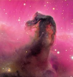 Friday, March 4, 2011: The Canada-France-Hawaii Telescope produced this stunning image of the well-known Horsehead Nebula. It is part of an enormous cloud of molecular gas and dust obscuring background light from nearby emission nebula IC 434, producing the silhouette.--Tom Chao