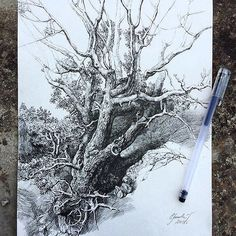 Artist's Sketchbooks That Will Change Your Life … Tree Drawings Pencil, Pencil Trees, Ink Pen Drawings, Forest Drawing, Nature Sketch, Artist Sketchbook, Landscape Drawings, Amazing Drawings, Ink Illustrations