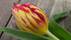 Spring Flowers Bring
