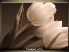 Obraz černobílých tulipánů