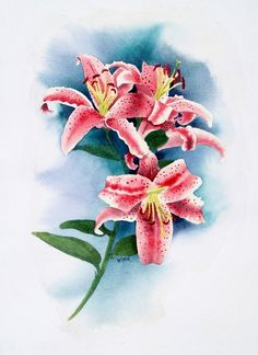 Stargazer Lilies - Original Floral Watercolor. 10% goes to A4C (Art for Critters)