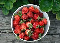 Consejos para poder recolectar algunas de las frutas más conocidas...