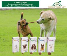 #Bravecto pills for dogs is designed to kill fleas, prevent flea infestations, and kill ticks for 12 weeks. For more information, call #YorkStreetVet on 044 874 4060 or visit us in store. #ilovemydoghttps://www.facebook.com/Yorkstreetvetshop/photos/pb.646016452164207.-2207520000.1439134251./801550053277512/?type=3