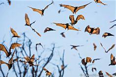 animal-migration-photography-191__880