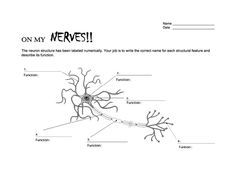 Brain & Neuron Coloring Pages Worksheets, Brain and Chart