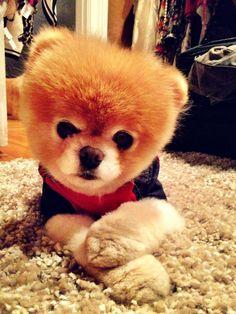 Boo! World's cutest dog...