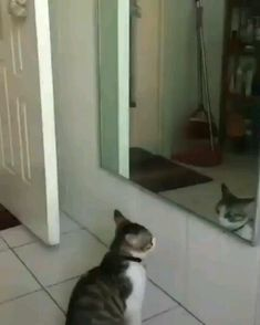 Cats are one of the most loving interesting and joyful pets. Cute cats and kitten spread happiness and joyfulness in homes by own nature and behaviors. Funny Animal Memes, Cute Funny Animals, Funny Animal Pictures, Cute Baby Animals, Animals And Pets, Funny Cats, Dumb Cats, Funny Pictures Of People, Funny Cat Videos