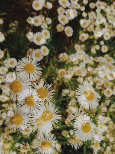 wildflower fields at monches farm: colgate, wisconsin. | madeline.vsco.co | VSCO Grid