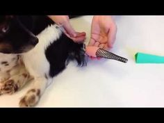 An aid in the treatment and prevention of tail tip injuries | Bonovate Limited | Bonovate Limited