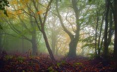 forest backround, 1920x1200 (645 kB)