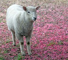 Getting Stitched on the Farm: Pink Petal Carpet and a Bunny Visit