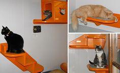 "Jackson Galaxy's ""super cat highway!""ideas...shelves, perches, cat stairs, hideaways, window walks..."