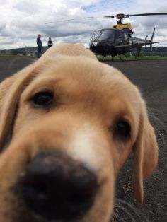 Trying to take a photo of a helicopter when suddenly... - Imgur