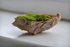 moss art | Marta Woo: MOSS ART...