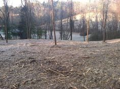 Forestry Mulching for New Pasture