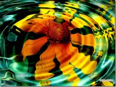 sun-flowers-wallpapers-pictures