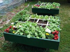 Advantages and disadvantages of square foot gardening