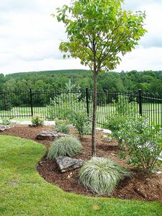 Simple Low Maintenance Front Yard Landscaping Ideas - All About Outdoor Gardens, Pool Landscaping, Landscape Design, Yard Landscaping, House Landscape, Landscape, Low Maintenance Landscaping, Backyard, Outdoor Landscaping