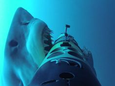 """Scientists get what they're calling """"the first up-close views of predatory behavior by sharks in the wild"""" thanks to some obliging great whites."""