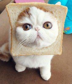 eat me?