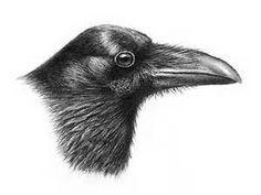 Imagini pentru raven with head
