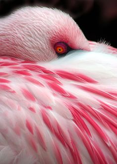 Flamingo - フラミンゴ (by Michael Elliott)