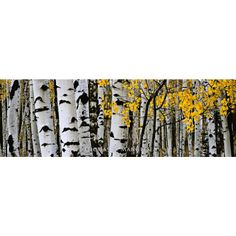 Time of Falling Leaves - $895.00