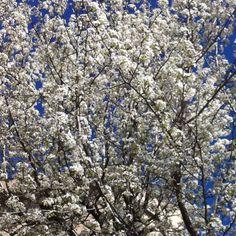 A veces un simple árbol nos sirve para hacer una composición matérica. Plaza del Oeste. Salamanca.
