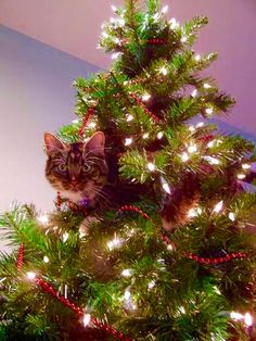 The Christmas tree is done. Has anyone seen the cat?