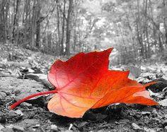Color Splash Photography | Color Splash Photos