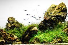 Mémoire Snap par Floraquatic. #aquascaping #aquarium