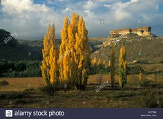 a-scenic-landscape-with-sandstone-geology-and-poplars-eastern-free-ACT76M.jpg (1300×950)