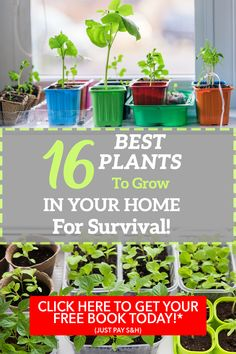 16 Best Plants To Grow In Your Home For Survival! Sign Up To Get 3 FREE Bonuses!