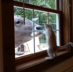 This curious buddy who really wants to boop his best friend. | 27 Cat Pictures Because Life Is Literally Just Terrible