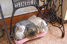 TOP 18 Funny Cats and Kittens Pictures   Funny Animals, Funny Cat   DomPict.com
